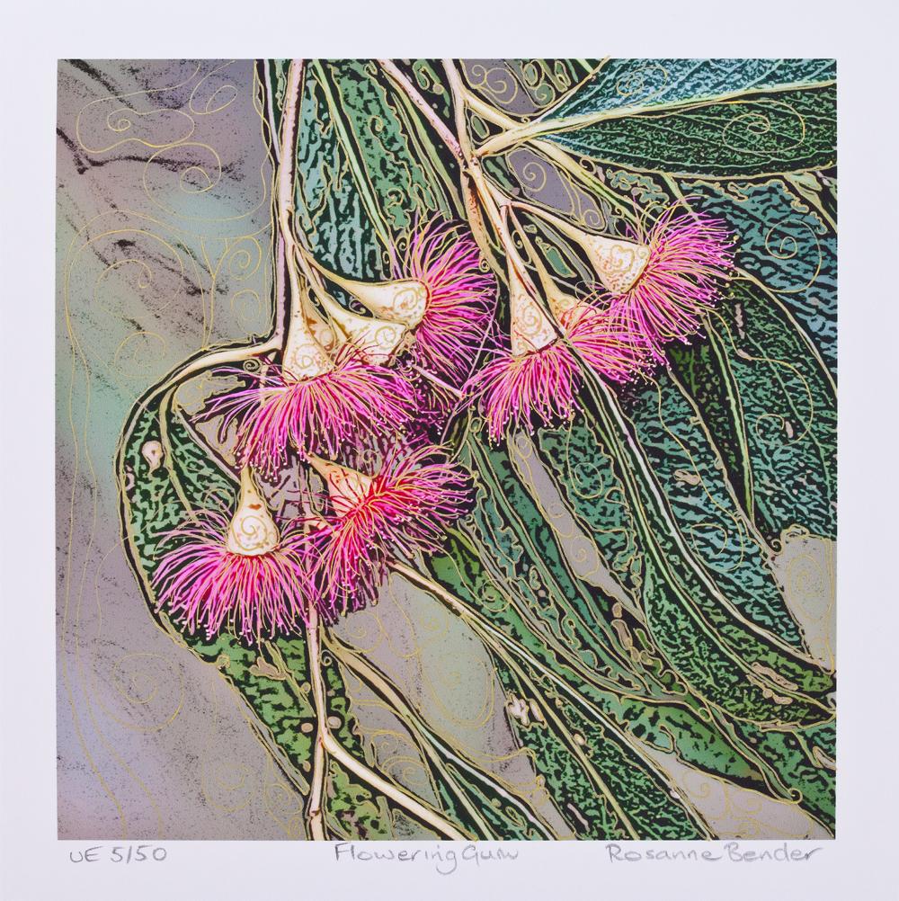 Flowering Gum - 2013