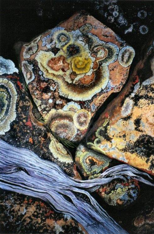 Lichen on Rocks - 2001